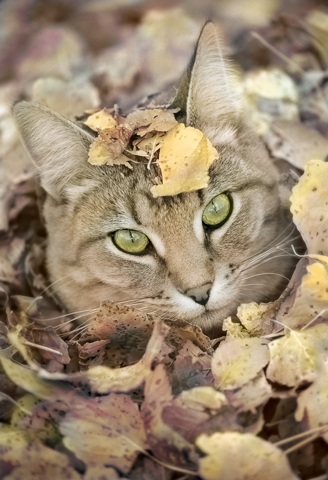 Romeo in Leaves